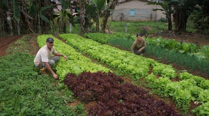 Incaper orienta agricultores familiares sobre a suspensão das Declarações de Aptidão ao Pronaf