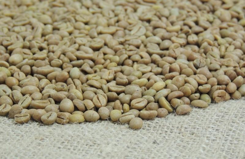 'Conquista ES8152': Incaper lança nova cultivar melhorada de café conilon propagada por semente